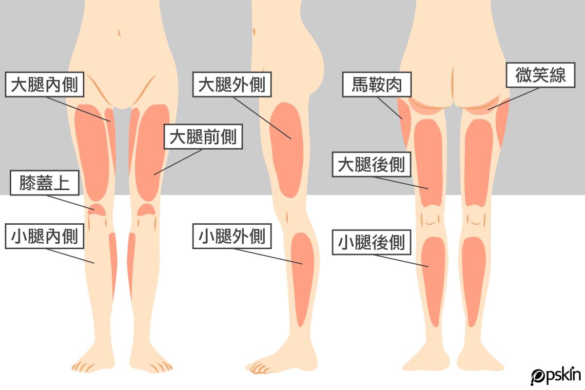 腿部體雕範圍