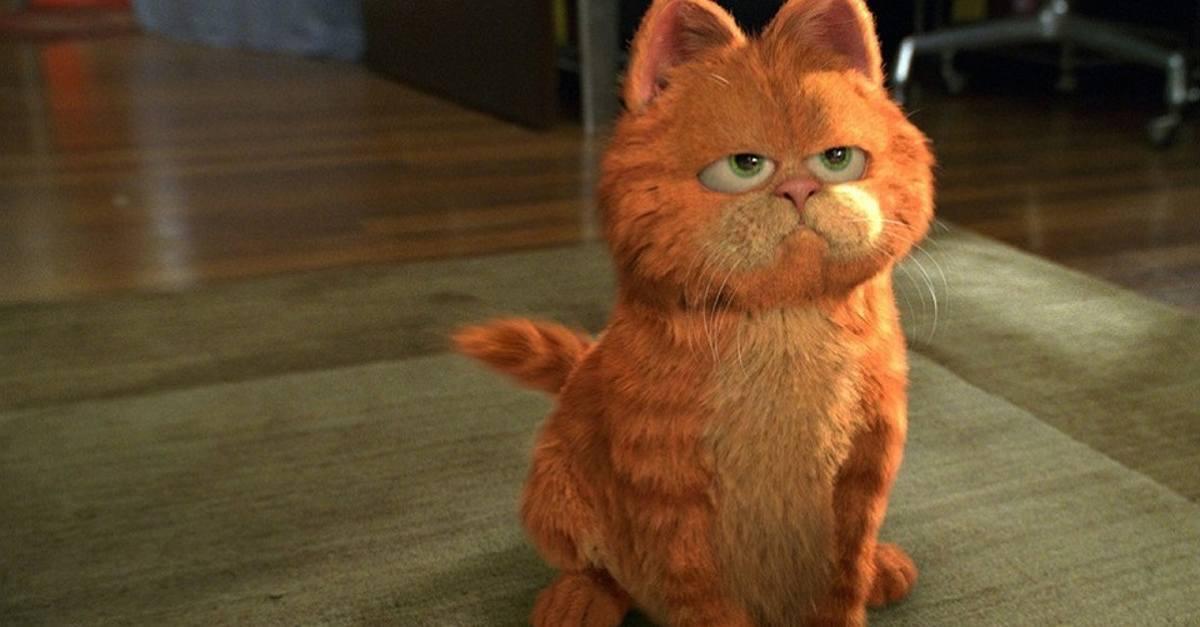 眼睛無神的加菲貓