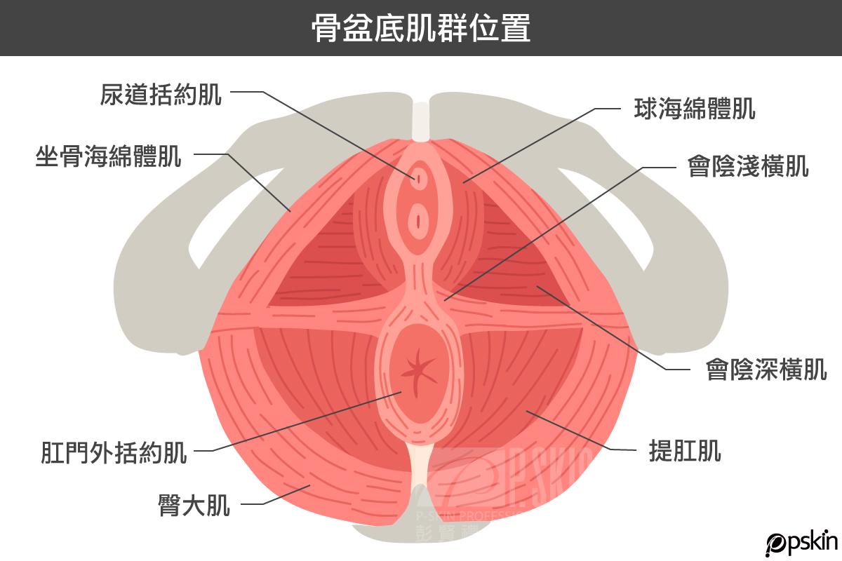 骨盆底肌群位置