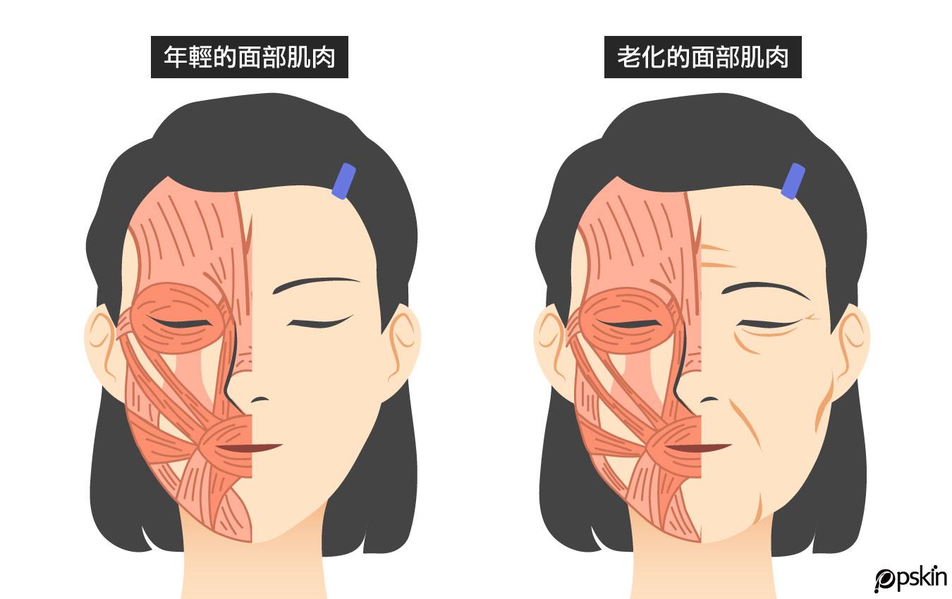 年輕的臉部肌肉VS.老化的臉部肌肉
