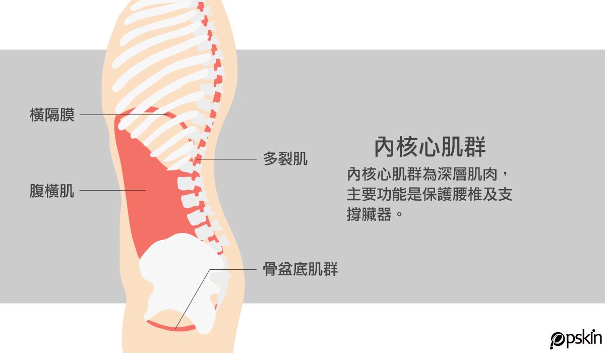 內核心肌群位置:橫膈膜、腹橫肌、多裂肌、骨盆底肌群都室內核心肌群,是深層肌肉,負責保護腰椎與支撐臟器。